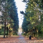 long avenue of trees in the park
